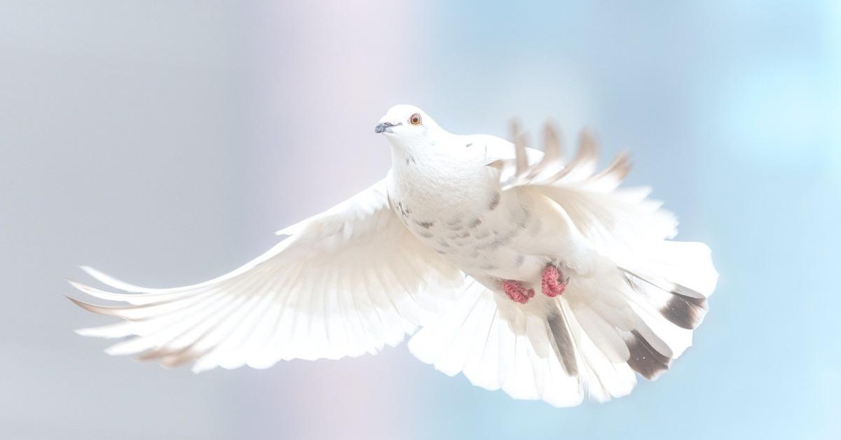 Летящий голубь